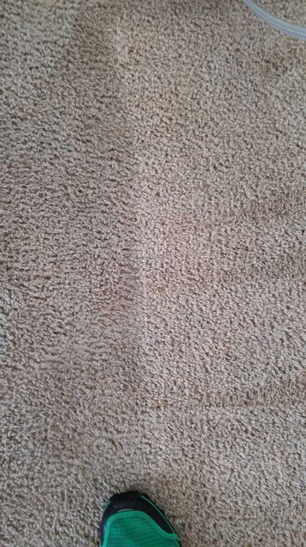 king organic carpet care