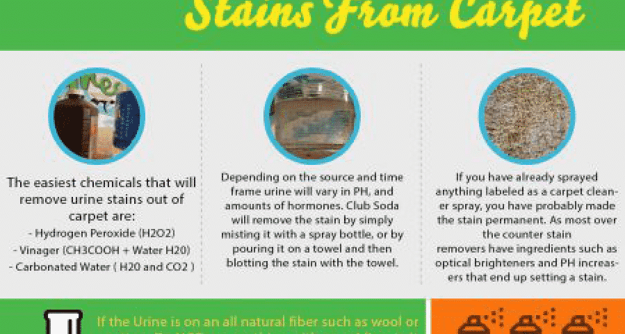 how to remove urine stains from carpet. Black Bedroom Furniture Sets. Home Design Ideas