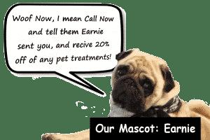 GreenWay-Carpet-Cleaning-dog pug