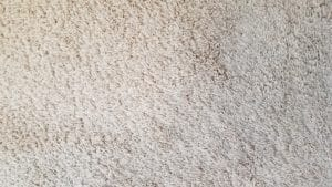 Amazing Results Las-Vegas-carpet-cleaning